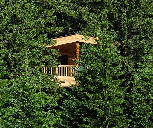baumh user im styrassic park spa natur und dinosaurier. Black Bedroom Furniture Sets. Home Design Ideas