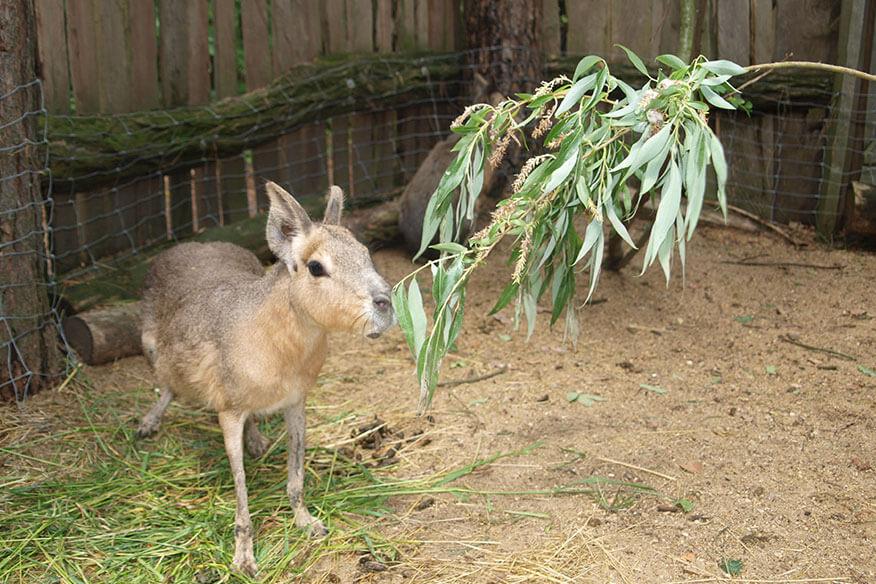Baumhaushotel der geheimen Welt von Turisede Tiergehege