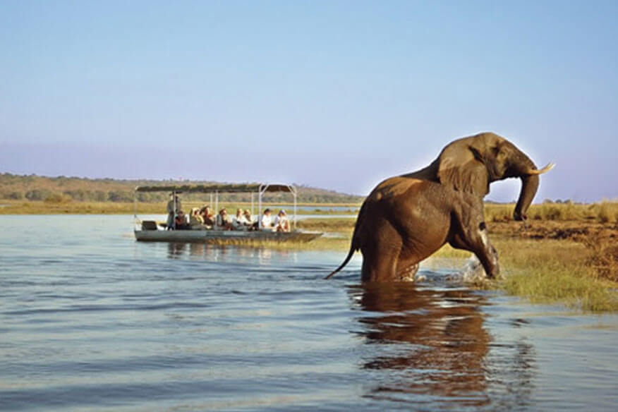 Baumhaushotel Tongabezi Safari